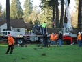 mr-tree-oregon-tree-pruning-services-crew
