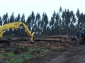 Commercial log gathering forestry clearing location tree service in Oregon