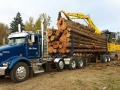 Commercial forestry log truck on location tree service in Oregon