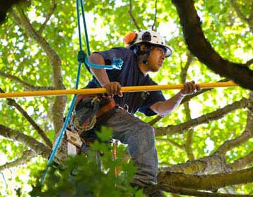 Mr. Tree, Inc. provides a wide range of Tree Service the Portland, OR area.