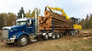 performing-tree-services-in-portland-or