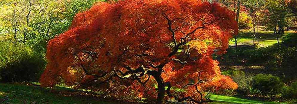 tree-shaping-at-portland-or-business