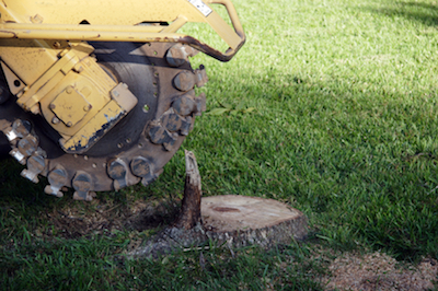 How A Stump Grinding Service Can Help You