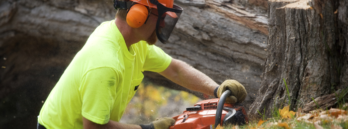 Tree Service Tualatin Oregon