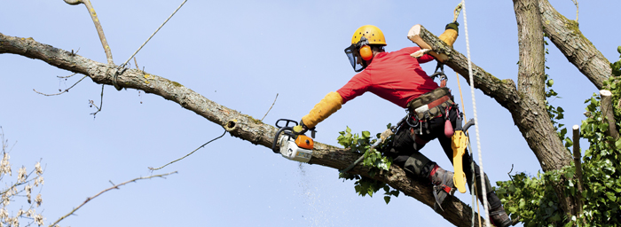 Tree Cutting Portland Oregon