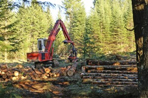 Tree Removal Wilsonville OR