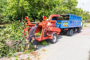 Tree Removal McMinnville