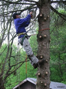 Tree Removal McMinnville OR