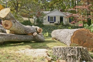 Tree Removal Troutdale