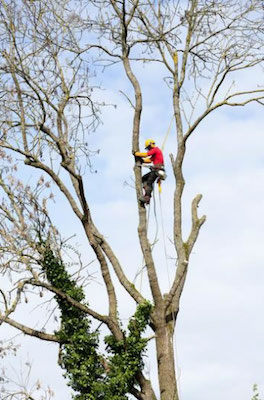 3 Scenarios Where You'd Benefit from an Arborist