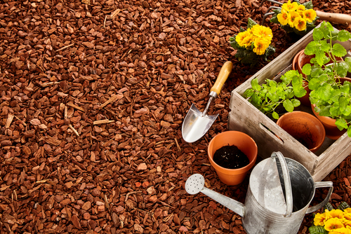 How to Use Stump Grindings as Mulch