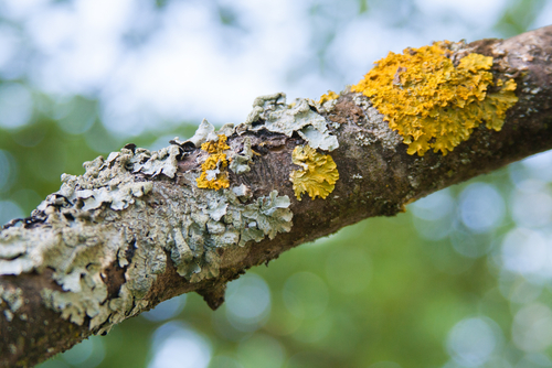 Watch Out For Lichens