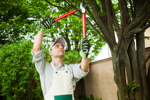 Tree Pruning Requires a Permit in Portland