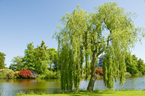Fast-Growing Trees for Impatient Planters
