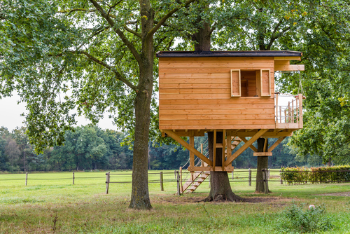 The Best Trees for a Treehouse