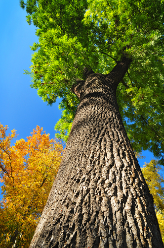 Watch Out for Emerald Ash Borer