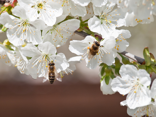 Trees that Attract Bees