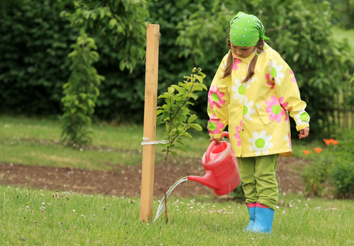 How to Keep Your Trees Hydrated in the Summer