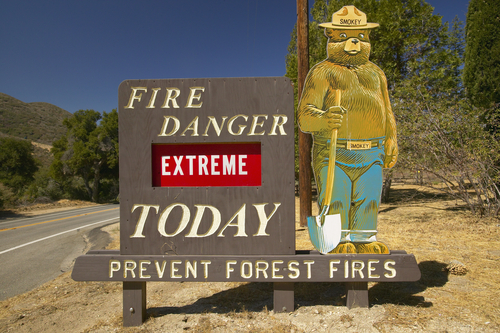 How to Prevent Forest Fires, According to an Oregon Arborist