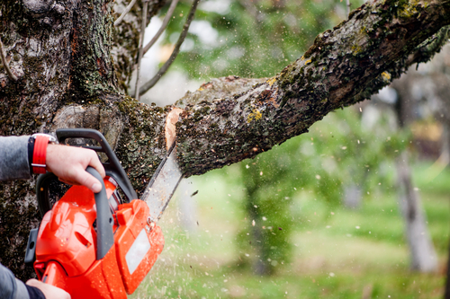 Tip to Safely Cutting Down Dead Trees