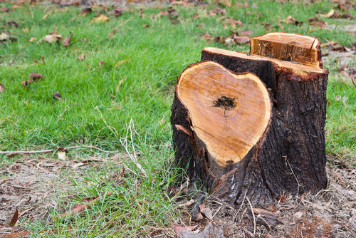 How to Rot Tree Stumps