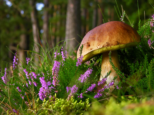 Edible Mushrooms You Might Find in Your Yard