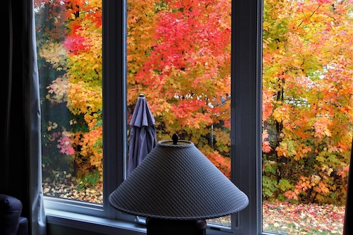 5 Common Questions on Fall Tree Care