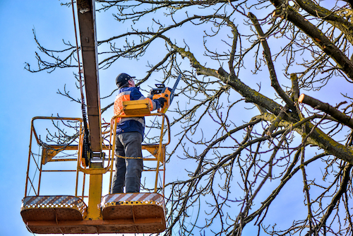 A Seasonal Guide to Tree Maintenance