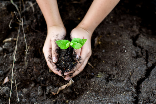 5 Ways to Celebrate Earth Day 2018