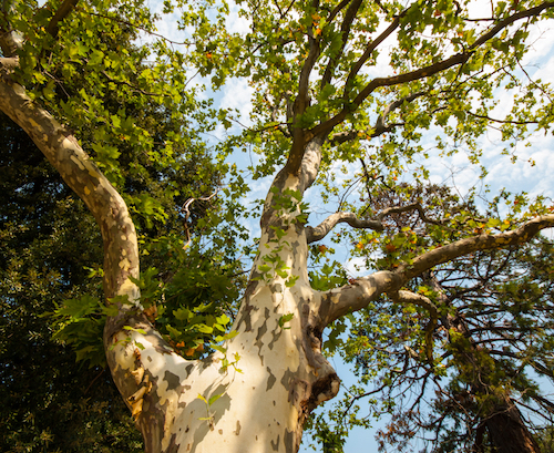 The Worst Trees to Plant in Portland