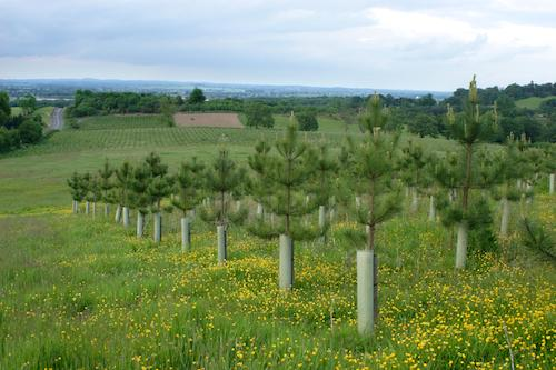 What You Should Know About Reforestation in Oregon