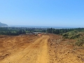 mr-tree-commercial-lot-clearing-oregon-coast