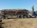 portland-commercial-tree-haulers