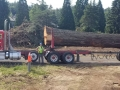 mr-tree-industrial-tree-removal-semi-truck
