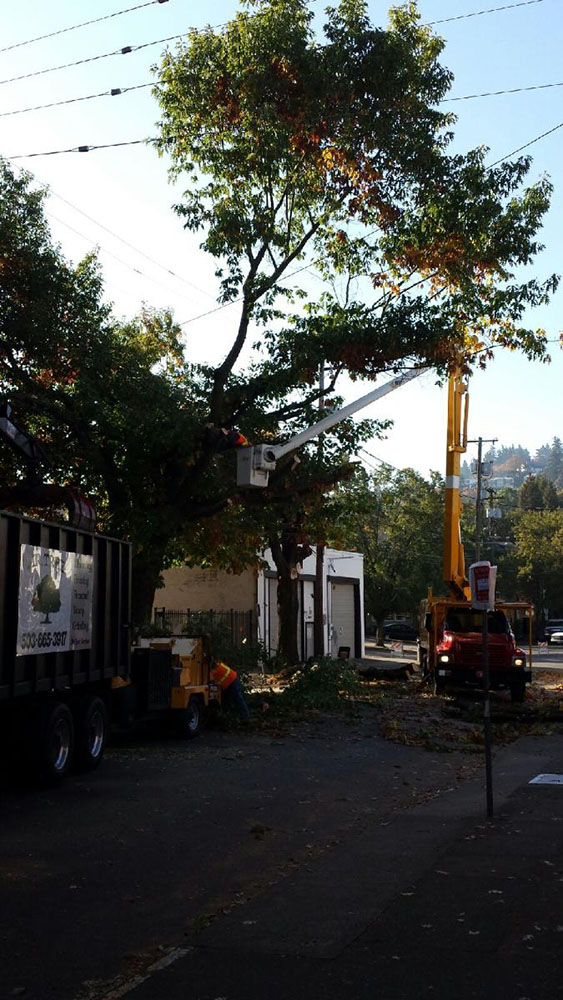 Commercial Tree Service T