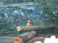 Cutting up removed trees into smaller pieces in Oregon