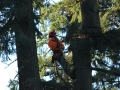 Tree removal service from Mr Tree can include the use of a crane