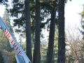 Equipment from Mr Tree assist with tree removal using a crane