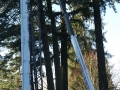 oregon-douglass-tree-pruning-services