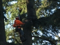 Tree removal worker from Oregon's Mr Tree Services