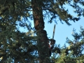 Once cut apart a successful separation is completed during a tree removal