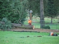 tree-removal-crew-cutting-into-smaller-sections