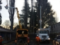 Using a bucket lift for a location Oregon tree service