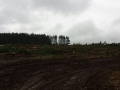 Commercial forestry clearing location tree service in Oregon