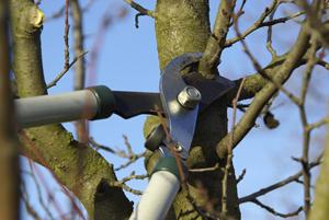 Tree Pruning Portland