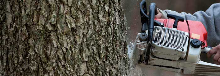 Tree Removal Portland