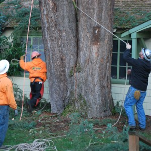 Tree Removal Portland, OR