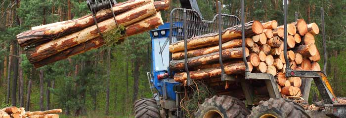 Commercial Logging Portland Oregon