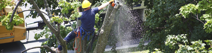 Commercial Tree Removal Portland