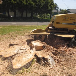 Commercial Stump Grinding Portland, OR